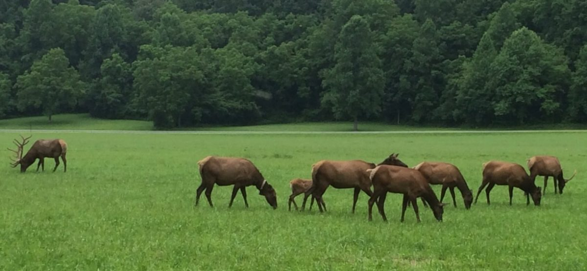 elk-viewing-franklin-north-carolina